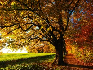 tree with orange leaves in fall